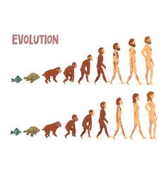 biology human evolution stages evolutionary vector image