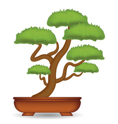 bonsai tree on a white background vector image