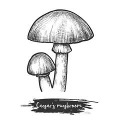 Caesars mushroom sketch europe shroom vector