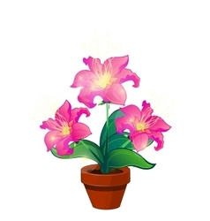 Bright pink magic flowers in pot isolated vector