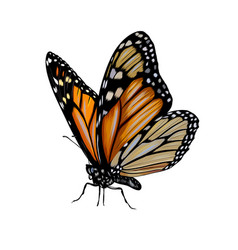 butterfly from a splash watercolor colored vector image