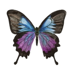 Butterfly watercolor painting on white background vector