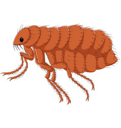 cartoon flea isolated on white background vector image