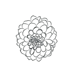 Dahlia flower simple black lined icon on white vector