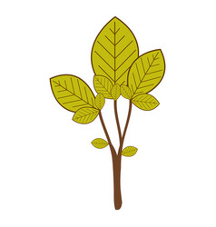 large ramifications with green leaves vector image
