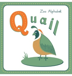 Letter Q - Quail vector