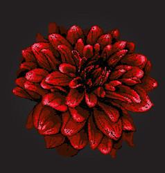 pointillism style dahlia vector image