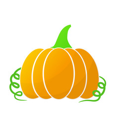 pumpkin summer harvest stock vector image