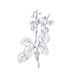 Round-leaved wintergreen wild flower floral vector