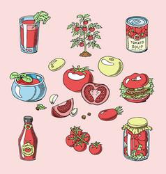tomato juicy tomatoes food sauce ketchup vector image