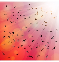 Birds seagulls silhouette in the rays on pink vector image