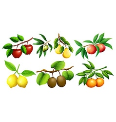 Different kind of fruits on branches vector