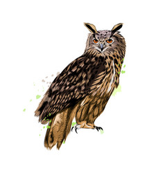 long-eared owl eagle owl from a splash of vector image