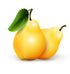 two yellow pears isolated on white background vector image