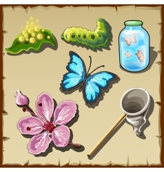 Life of a butterfly in drawn set of entomologist vector