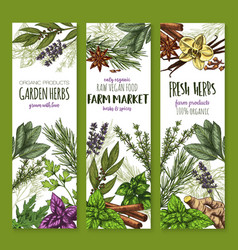 herb and spice fresh garden food sketch banner vector image