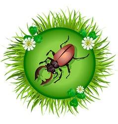 beetle in a clearing vector image