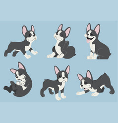Boston terrier dog set vector