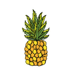 Delicious pineapple tropic fruits vector