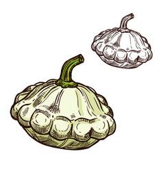 Pattypan squash sketch vegetable icon vector