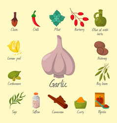 Spices condiments and seasoning food herbs vector