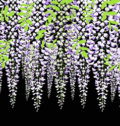 Blooming wisteria branch with leaves vector image vector image