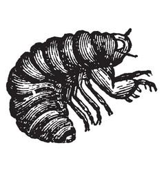 Larva of the cicada vintage vector