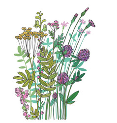 Sketch wildflowers on a white background vector