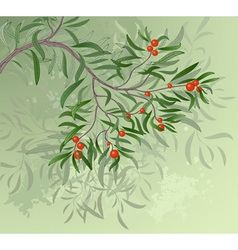 branch with red berries vector image