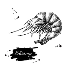 Vintage shrimp drawing Hand drawn vector