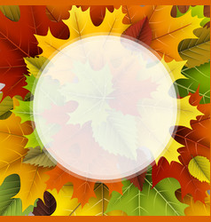 autumn background with colorful leaves vector image