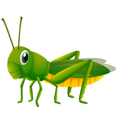 cricket on white background vector image