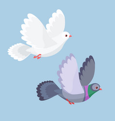 dove and pigeon flying vector image
