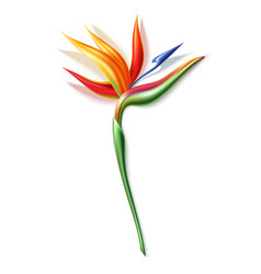 Strelizia reginae realistic flower in 3d vector