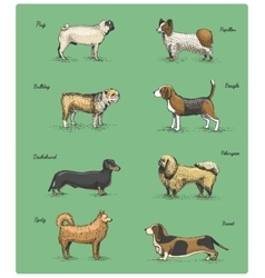 dog breeds engraved hand drawn vector image vector image
