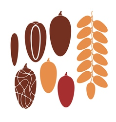 Date Fruit vector
