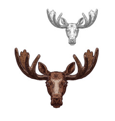 Moose or elk wild animal head isolated sketch vector