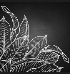 graphic heliconia leaves vector image