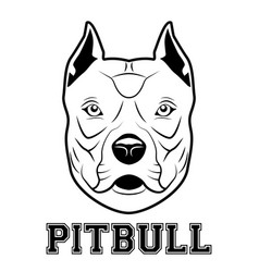 Pitbull head mascot vector