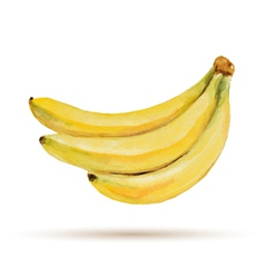 Banana hand drawn watercolor on a white background vector image
