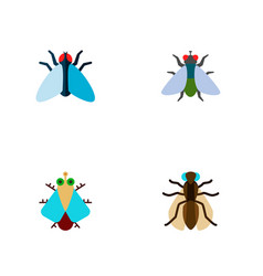 Icon flat fly set of buzz gnat housefly and vector
