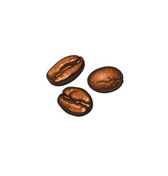 Three hand-drawn roasted coffee beans vector