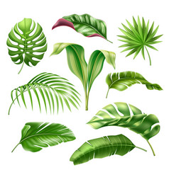 Tropical leaves realistic monstera palm set vector