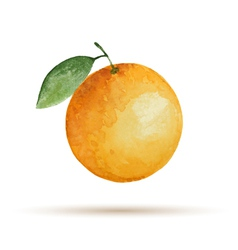 Orange hand drawn watercolor on a white background vector