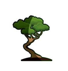 cartoon bonsai tree natural foliage image vector image