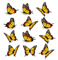 Collection of yellow butterflies flying in vector image