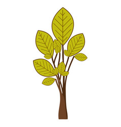 Ramifications with green leaves plant icon vector