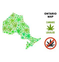 Royalty free marijuana leaves style ontario vector