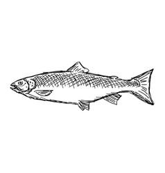 Salmon fish sketch doodle vector