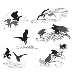 set of scenes of eagle life vector image
